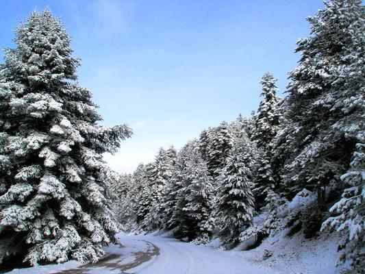 Το χιόνι δημιουργεί μοναδικές εικόνες που δικαιολογούν την παλαιότερη καθιέρωση του Σαραντάπηχου ως ένα ορεινό θέρετρο διεθνούς εμβέλειας! - by spidrman