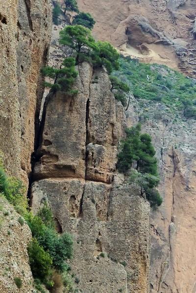 Mpoufouskia, Aigialeia, Achaea Γεωλογικοί σχηματισμοί, στα Μπουφούσκια Αχαΐας  Πεύκα φυτεμένα στο πουθενά, πάνω στους μετεωρίτικους (κροκαλοπαγείς) βράχους! - by spidrman