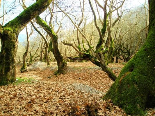 Planitero, Kalavrita, Achaea Πηγές ποταμού Αροάνιου, Πλανητέρο Αχαΐας.  Ακόμα και το χειμώνα, το πλατανόδασος, δίπλα στης πηγές, είναι χάρμα οφθαλμών! - by spidrman