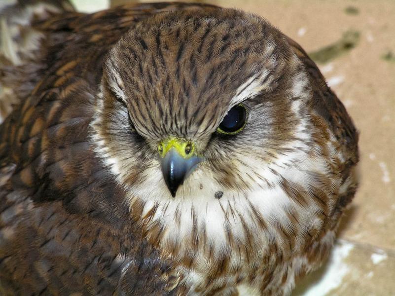 Lemnos Island Bird watching  Photo by Ioannis Galiouris