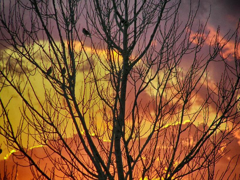 Lemnos Island Fiery tree  Photo by Ioannis Galiouris