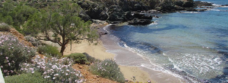 Finikas, Syros,