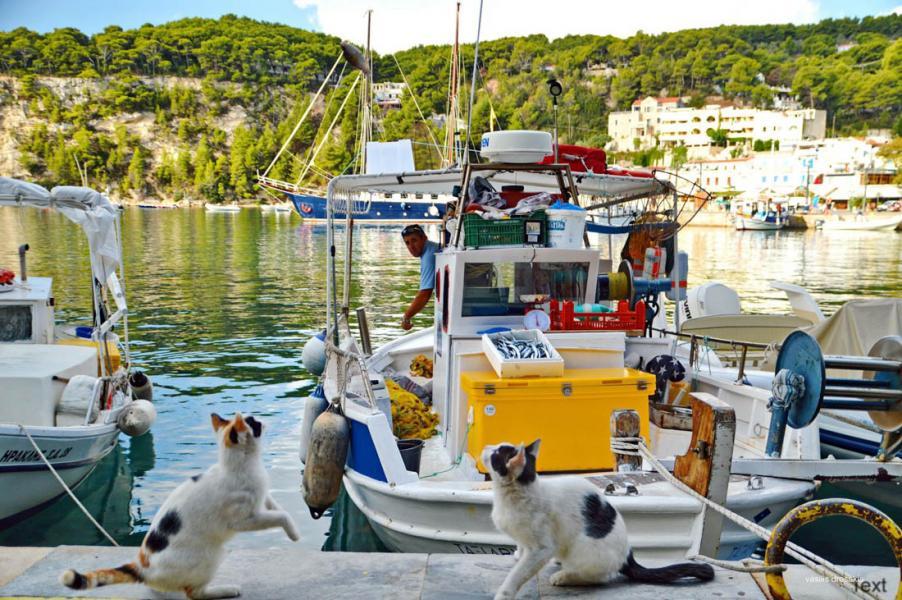 Patitiri, Alonnisos<br>Photo by Vasilis Drosakis
