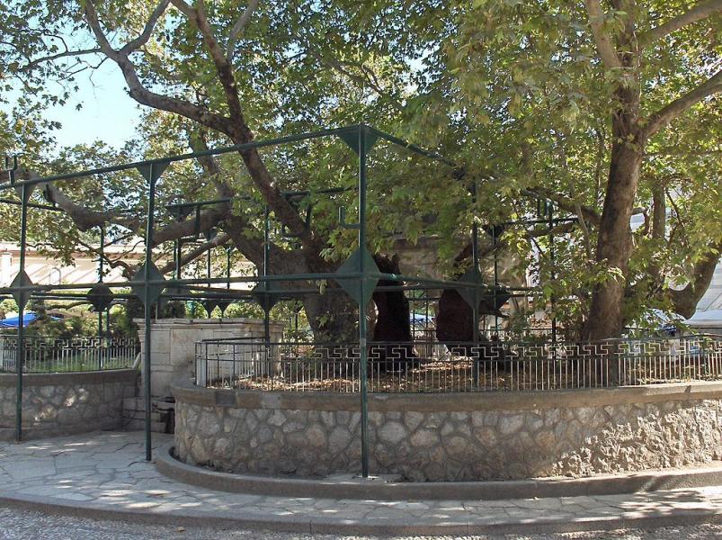 Kos Island Tree of Hippocrates  photo by Steven Fruitsmaak commons.wikimedia.org/wiki