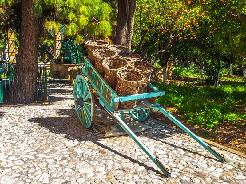 Chios Island Orange tree orchard in Kampos  Michael Tetteris / Chios Tourism Department