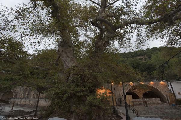 Archea Epidavros, Epidaurus, Argolis Plane Tree of Krasi  photo by Y Skoulas, www.visitgreece.gr